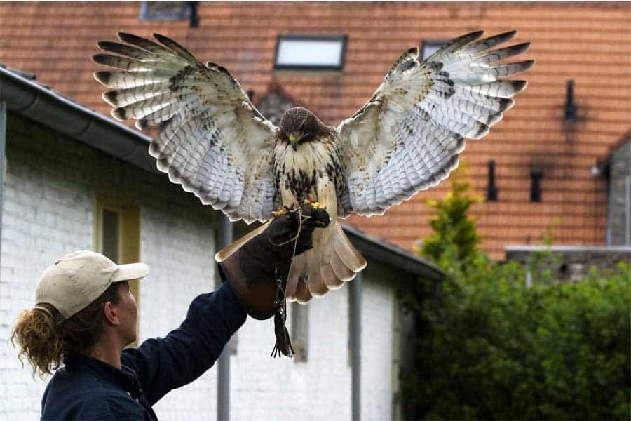 Roofvogel Belevenis 50 Jaar