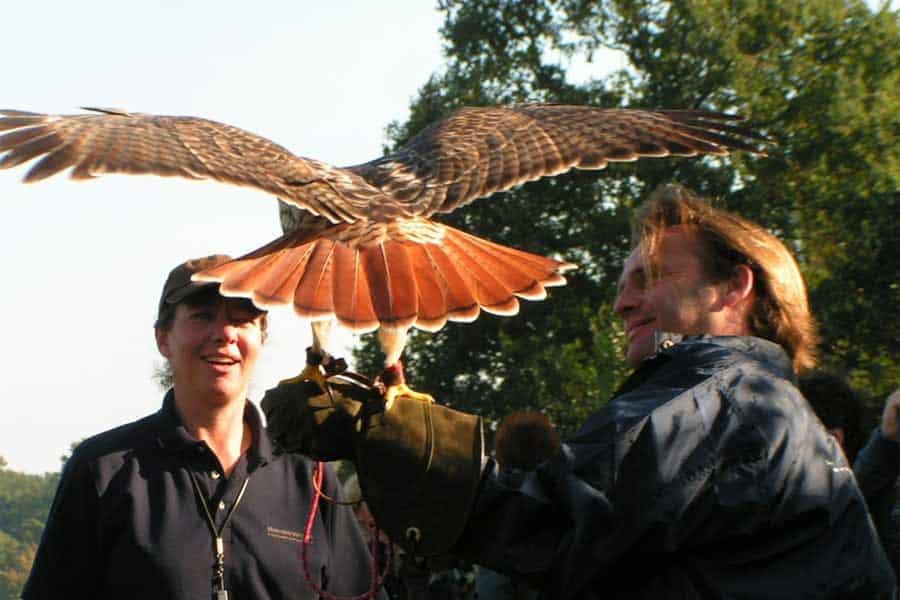 Roofvogel Workshop Belevenis